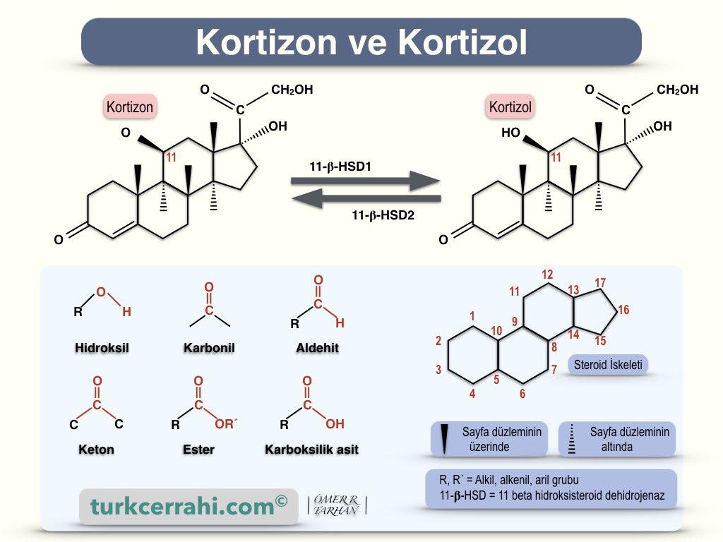 Kortizon ve kortizol