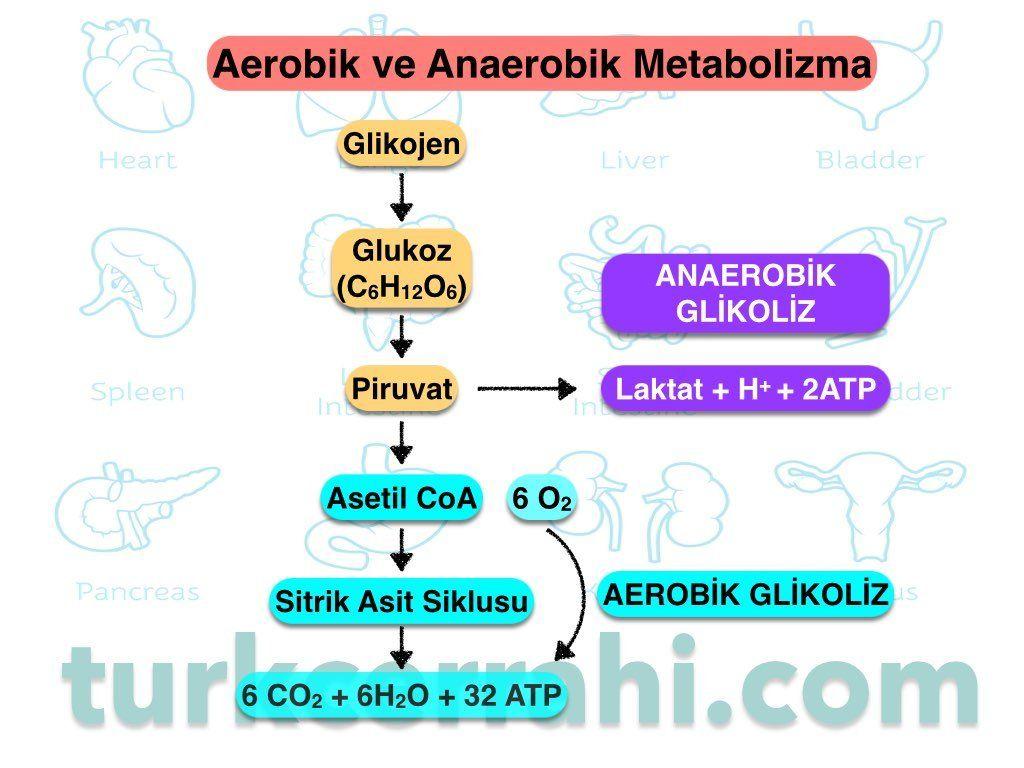Normal şartlarda mitekondri oksijeni kullanarak 6 karbonlu glukozdan 32 ATP üretir. Buna aerobik glikoliz denir. Oksijen yokluğunda piruvat daha fazla metabolize edilemez ve laktata dönüştürülür. Sadece 2 ATP üretilirken bu olay hem dokuda hem de kanda asidoza neden olur.