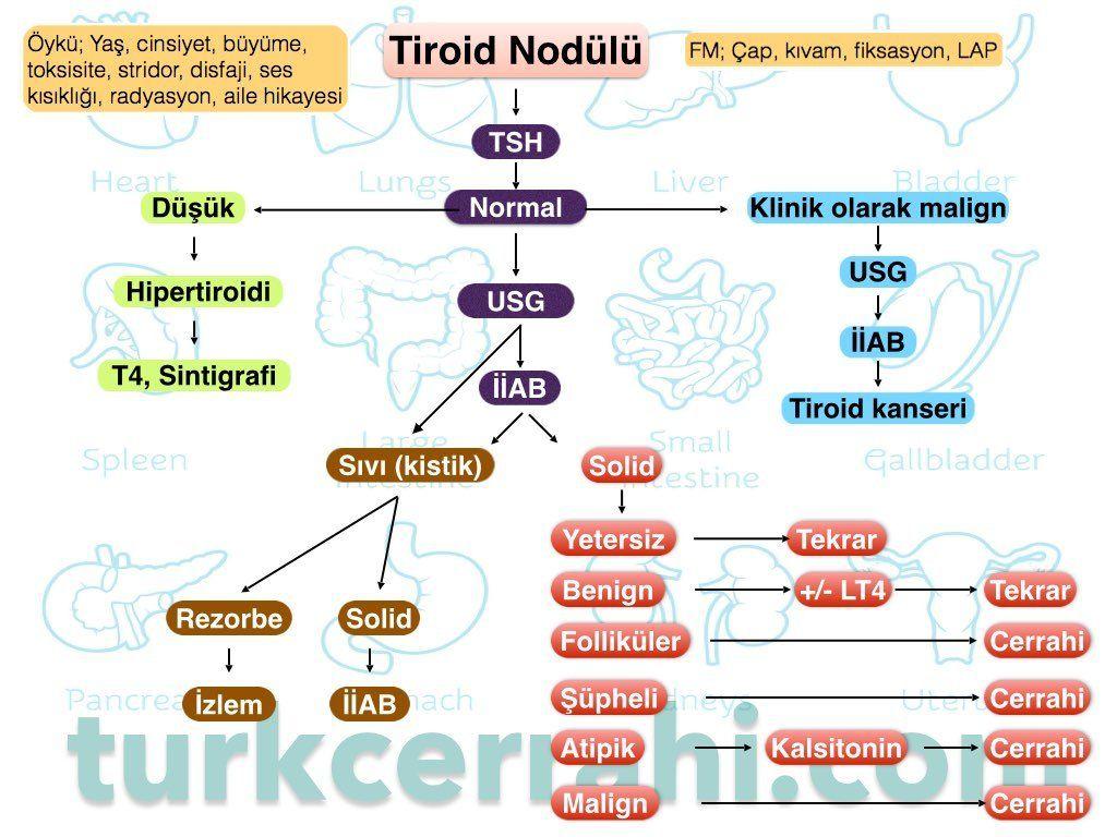 Soliter tiroid nodülüne yaklaşım